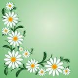 Frontera floral con las manzanillas Foto de archivo libre de regalías
