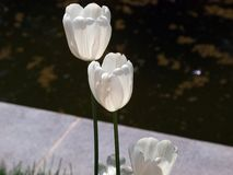 En underbar tid av blommaberlock! royaltyfria bilder