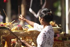 En ung Balinesekvinna som sätter dofter i traditionell kläder på ceremoni för hinduisk tempel, Bali ö, Indonesien Arkivbilder