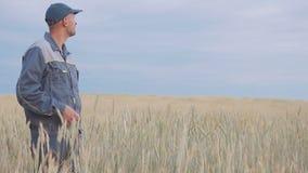 En ung bonde kontrollerar växterna i ett rågfält 4K arkivfilmer