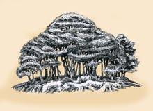 En ung dunge av träd Royaltyfri Bild