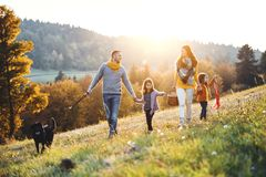 En ung familj med två småbarn och en hund på går på en äng på solnedgången royaltyfri fotografi