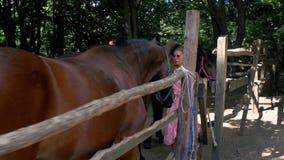 En ung flicka i rosa sundress slår härliga bruna hästar i en paddock 4K video 4K arkivfilmer