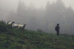 En ung flicka med ett selfiepinnefoto med fåren i dimman arkivbilder