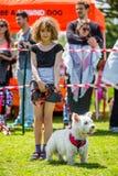 En ung flicka med en hund - vita västra höglands- Terrier på showen för Hampstead hedhund fotografering för bildbyråer