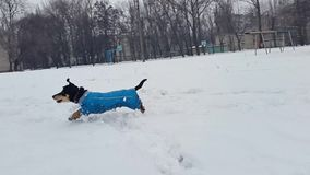 En ung flicka spelar med en hund i det insnöat vintern stock video