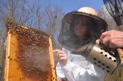 En ung flickabeekeeper i bikupa arkivfoton