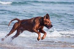 Spring i havet förföljer Arkivbilder