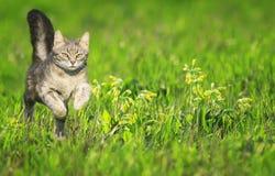 En ung katt kör behagfullt över en grön ljus äng med blommor på en solig klar vårdag royaltyfria bilder