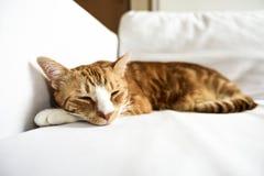 En ung katt som hemma, sött sover på en soffa och härligt royaltyfri foto