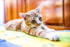 En ung katt som ligger i ett roligt, poserar på soffan Arkivfoton
