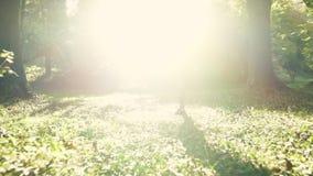 En ung kvinna gör yogaposition på soluppgång arkivfilmer