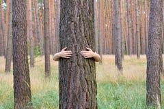 En ung kvinna som kramar en trädstam i en skog i sommardag arkivfoto