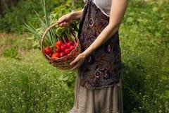 En ung kvinna som rymmer i händer en korg med blandade organiska nya grönsaker, på en härlig grön trädgårdbakgrund fotografering för bildbyråer