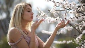 En ung kvinna trycker på en blomma filial av ett aprikosträd lager videofilmer
