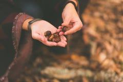 En ung kvinna väljer upp kastanjerna som är stupade på jordningen i en höstlig skog royaltyfri bild