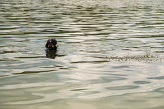 En ung man i en dräkt för att dyka Royaltyfria Foton