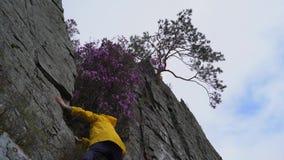 En ung man i en gul regnrock klättrar längs kanten av en klippa med ett träd på kanten för att välja en blomma stock video