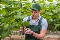 En ung man i likformig arbetar i ett växthus royaltyfria foton