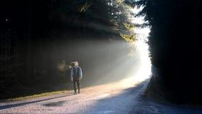 En ung man som går ner vägen i morgonsoluppgång stock video
