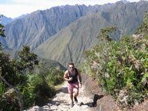En ung manlig turist som gör hans väg till överkanten av Machu Picchu M arkivfoto