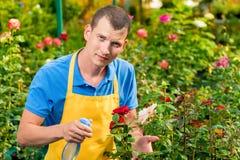 En ung trädgårdsmästare strilar hans favorit- rosor med vatten arkivfoto