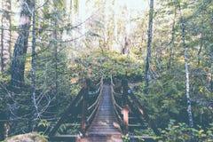 En upphängningbro i en skog fotografering för bildbyråer