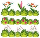 En uppsättning av blomman Bush stock illustrationer