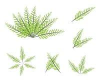 En uppsättning av den gröna ormbunken på vit bakgrund Arkivfoto