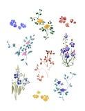 En uppsättning av den lilla blommavattenfärgen med sidor Linblommor Royaltyfri Foto