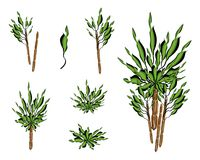 En uppsättning av det isometriska palmliljaträdet eller Dracaenaväxten Royaltyfria Foton