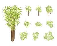 En uppsättning av det isometriska palmliljaträdet eller Dracaenaväxten Royaltyfri Foto