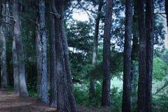 En uppsättning av Georgia sörjer träd arkivfoto