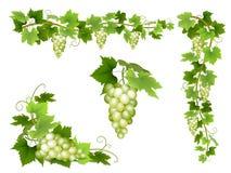 En uppsättning av grupper av vita druvor Royaltyfria Bilder