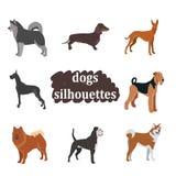 En uppsättning av hundkapplöpning av olika avel Royaltyfri Foto