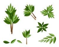 En uppsättning av isometriska vintergröna träd och växter Royaltyfri Foto