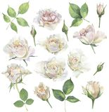 En uppsättning av rosor för lyckönskan vektor illustrationer