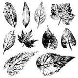 En uppsättning av stämplar av verkliga sidor från träd och blommor Royaltyfri Foto