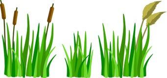 En uppsättning av tecknad filmgräs, vasser och rottingar Arkivfoton