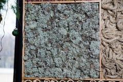 En uppsättning av texturer av plankor och andra material Arkivfoton