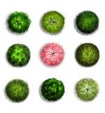 En uppsättning av trädöverkantsymboler Royaltyfri Fotografi