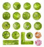 En uppsättning av treetopsymboler, for arkitektonisk eller landskapdesign Arkivfoto
