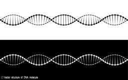 En uppsättning av två varianter av DNAmolekylen Svartvit variation Enkel teckning, symbol royaltyfri illustrationer