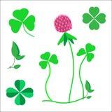 En uppsättning av växt av släktet Trifoliumsidor, ett symbol av lycka, en växt av släktet Trifoliumblomma royaltyfri illustrationer