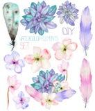 En uppsättning med de blom- beståndsdelarna för vattenfärg: suckulenter, blommor, sidor och fjädrar