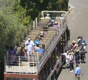 En upptagen dag på Sanen Diego Zoo Fotografering för Bildbyråer