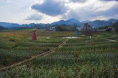 En väderkvarn i huangshan som är västra av huangshan, anhui landskap Arkivbild