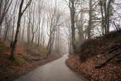 En väg i en skog arkivbilder