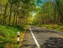 En väg i skogen Arkivfoto