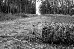 En väg i svartvitt Royaltyfri Foto